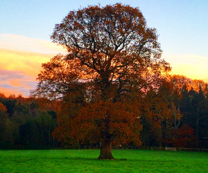 autumn, sunset, and tree image