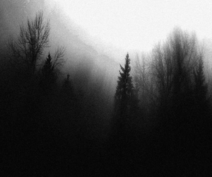 forest, trees, and black and white image