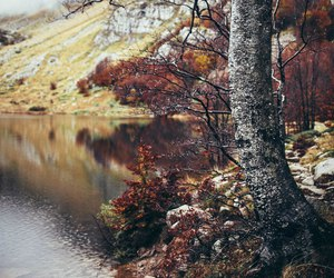 autumn, cold, and forest image