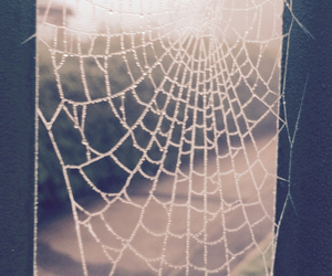 spider, web, and own photo image