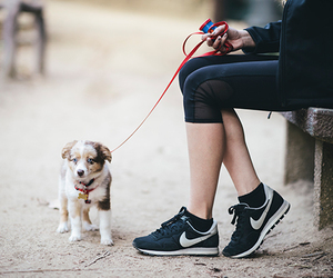 dog, cute, and fitness image