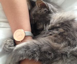 cat, cozy, and friend image