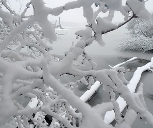 pale, snow, and nature image