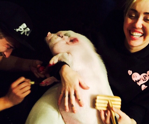 miley cyrus, pig, and smile image