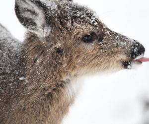 snow, cute, and deer image