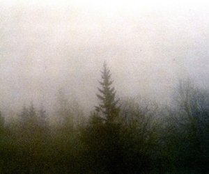 forest, green, and mist image