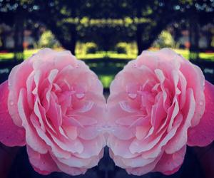 flower, jardin, and nantes image