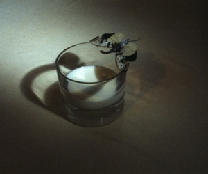 butterfly, glass, and camille vivier image