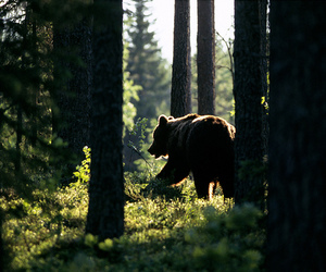 animal, forest, and nature image