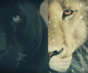 leopard, lion, and tiger image