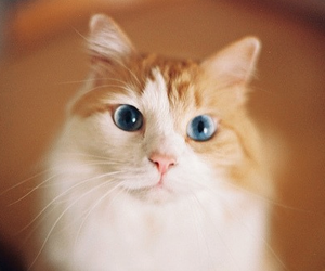 cat, cute, and hipster image