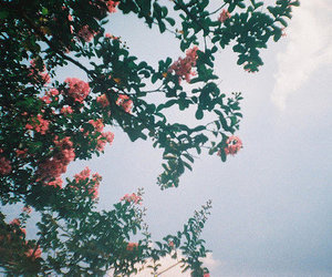 flowers, tree, and sky image