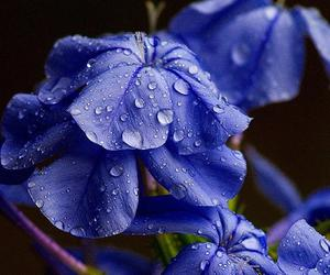 blue, drops, and flowers image