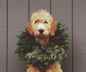 dog, christmas wreath, and cute image