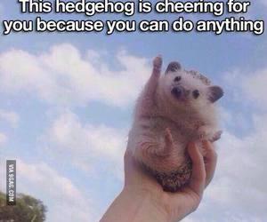 hedgehog, cute, and motivation image