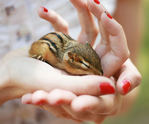 cute, animal, and chipmunk image