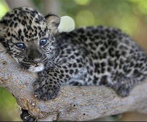 adorable, leopard, and pattern image