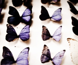 butterflies, galaxy, and 1d image