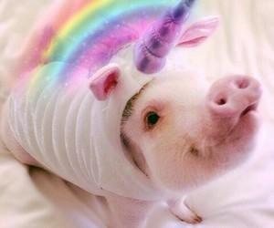 pig, unicorn, and animal image
