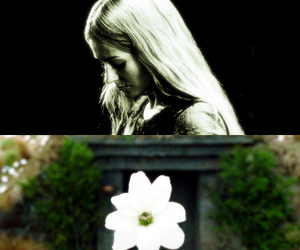 eowyn, flower, and lord of the rings image