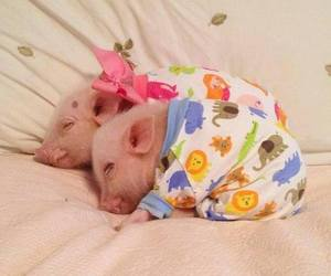 piglet and pig image