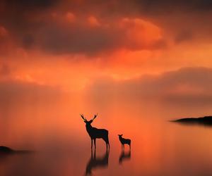 deer, animal, and sunset image