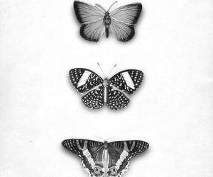 butterfly, black and white, and black image