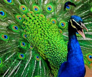 blue, colorful, and colors image