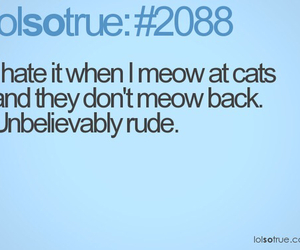 cats, funny, and meow image