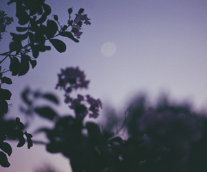 moon, purple, and tree image