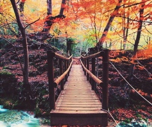autumn, nature, and bridge image