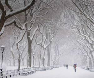 snow, winter, and Central Park image