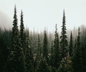 ale, breathe, and forest image