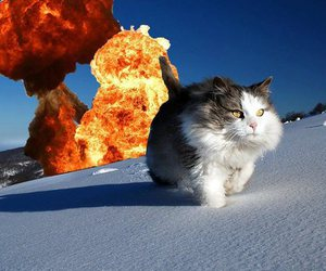 cat, funny, and explosion image