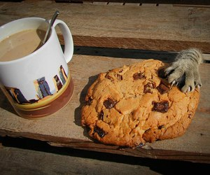 cat, cookie, and coffee image