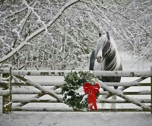 horse, christmas, and snow image