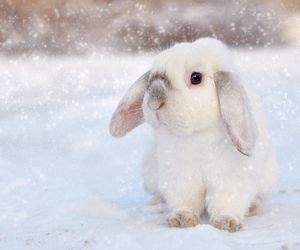bunny and snow image