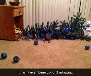 cat, funny, and christmas tree image