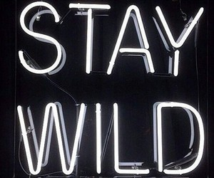 wild, light, and neon image