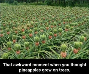 pineapple, funny, and tree image
