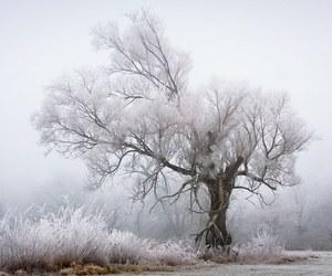 winter, snow, and tree image