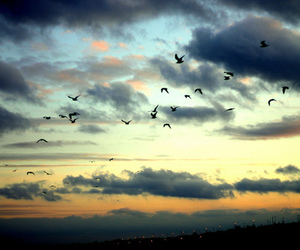 birds, clouds, and sky image