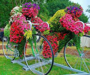 flowers, bike, and garden image