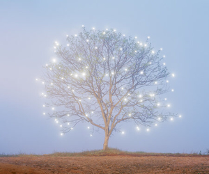light, tree, and nature image