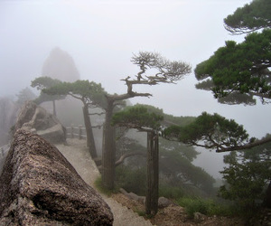 nature, trees, and fog image