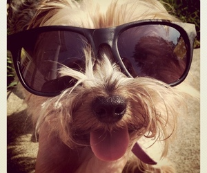 adorable, iphone, and raybans image