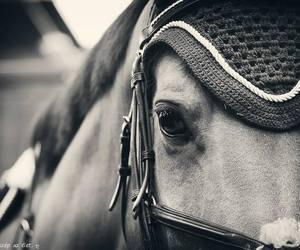 animal, girl, and horses image