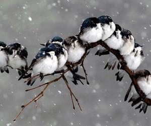 bird, snow, and winter image