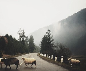 ature, crossing, and hipster image