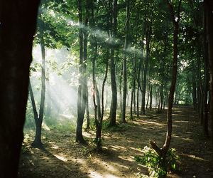 Dream, love, and forest image